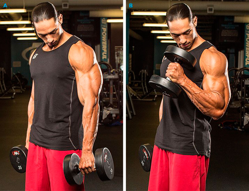 How to do a hammer on biceps with dumbbells