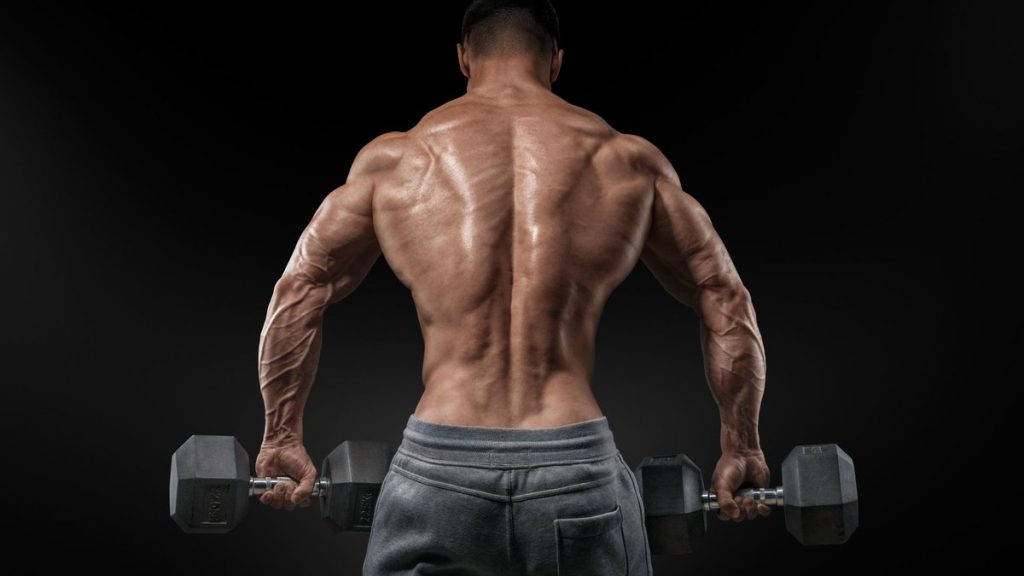 How to pump the muscle group of the back